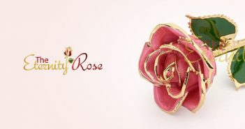 eternity rose